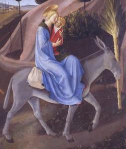L'ASINO NELLA BIBBIA. Brevi cenni sulla presenza biblica di un animale mite ma tenace