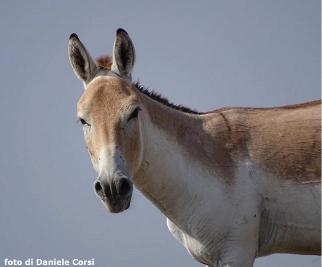 WILD ASS DIARY – Con gli asini selvatici nel deserto indiano