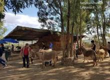 20 asinelle sarde in aiuto agli operatori sociosanitari (E un saluto commosso a Muzammil)