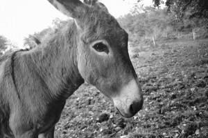 donkey-2804147_960_720
